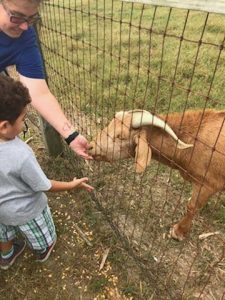kid looking at goat